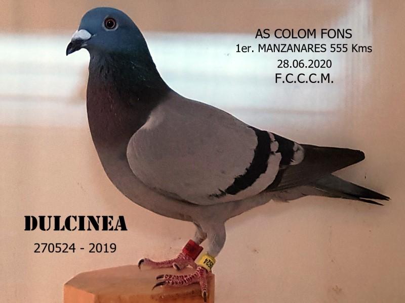 Aquesta imatge té l'atribut alt buit; el seu nom és Dulcinea-19-270524_EDIT-op.jpg